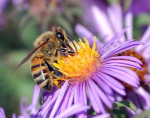 Day of the Honey Bee - May 29