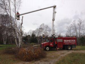 Ouimette's Tree Service